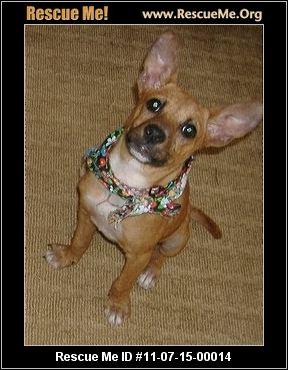 to basenji rescue sender ashley trueman date august 24 2011