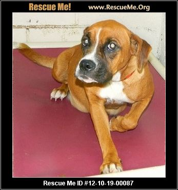Anyone know who can take a pregnant boxer from Chesterfield SC?