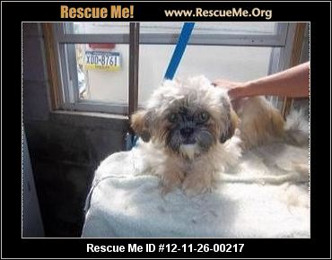 Make an end of year tax-deductible donation: Donate to Shih Tzu Rescue