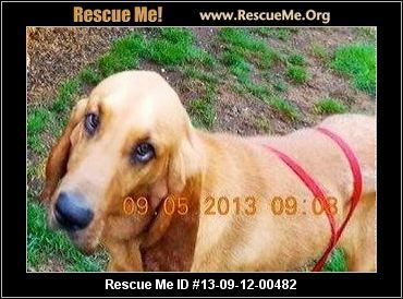 A Bloodhound To Die For Bloodhound Blog...