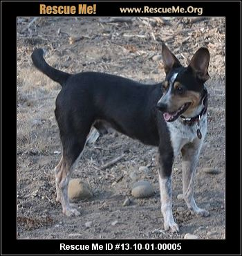 Queensland Heeler Dog Rescue California