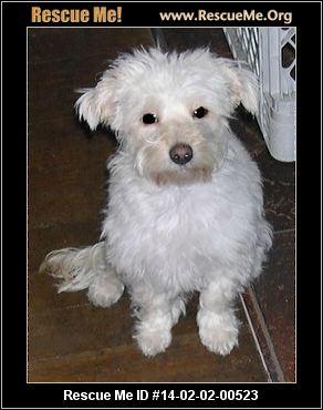 Pj S Small Dog Rescue