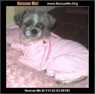 Adult Shih Tzu Rescue Virginia