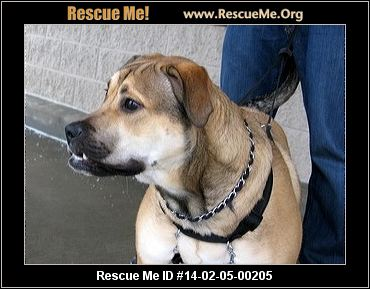 rescue me id 14 02 05 00205 mack male lab mix age puppy compatibility ...