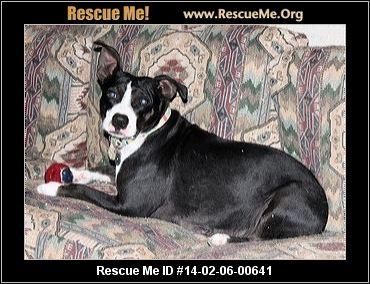 Central Coast Border Collie Amp Herding Dog Rescue Paso Robles Ca Rescue Animals