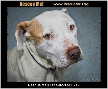 rescue me id 14 02 12 00219 peaches female pit bull mix age young ...
