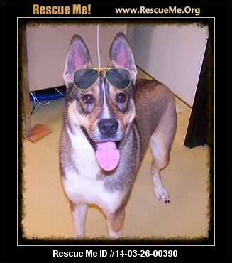 Yolo is a Husky/Shepherd mix, and he is a happy fun loving guy. He ...