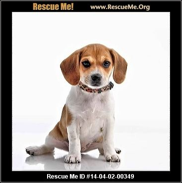 Apply To Be Dog Rescue In Rhode Island