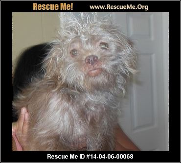 Rescue Me ID: 14-04-06-00068 Teddy (male)