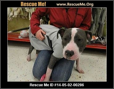New York Pit Bull Rescue Adoptions Rescuemeorg