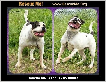 urgent this animal could be euthanized if not adopted soon