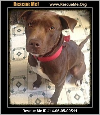 rescue me id 14 06 05 00511 kane male pit bull age young adult ...