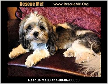 shih tzu rescue sacramento health spayed vaccinations current 6470