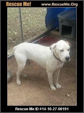 Kc Dog Rescue Arkansas