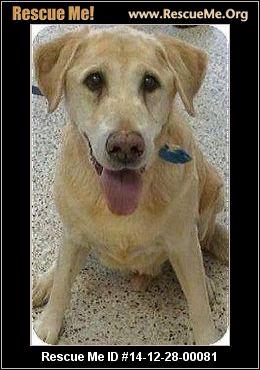 Senior Dog Rescue Cleveland Ohio