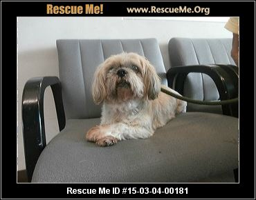 shih tzu rescue sacramento west valley animal shelter 9582