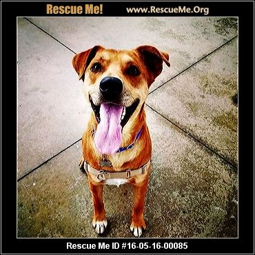 Dancing Dog Rescue And Recovery Ranch Colorado
