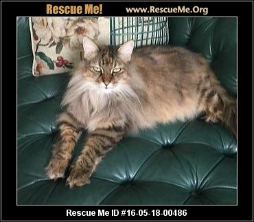 Declawed Cats For Adoption In Houston Tx