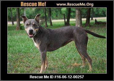 Charleston Dog Rescue In Charleston Ar