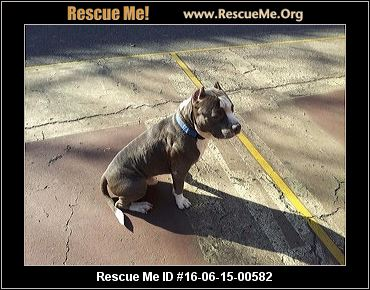 Friends Of Freddie Pet Rescue Middle Island Ny
