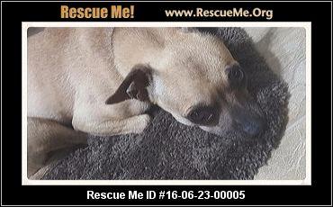 Georgia Chihuahua Rescue ― Adoptions ― Rescueme Org