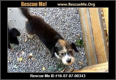 California Jack Russell Rescue €� Adoptions €� Rescueme Org