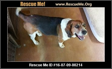 Texas Beagle Rescue ― Adoptions ― Rescueme Org