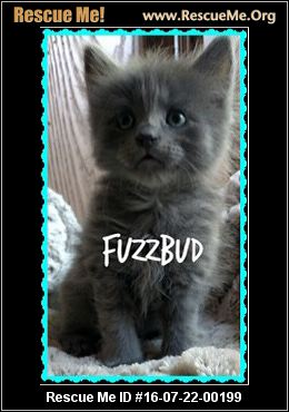 Maine Coon Blog ― RescueMe Org