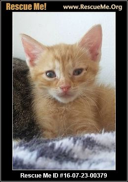from Lucian gay friendly adoptions domestic