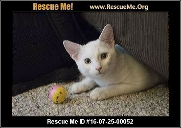 Cat Rescue Vallejo Ca