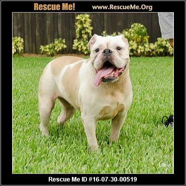 Florida Bulldog Rescue ― Adoptions ― Rescueme Org