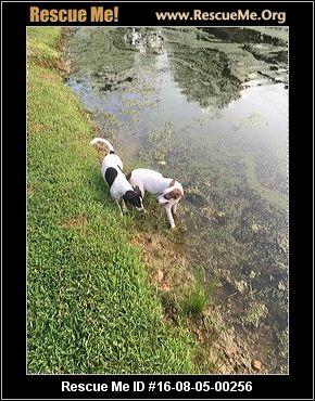 North Carolina Beagle Rescue ― Adoptions ― Rescueme Org