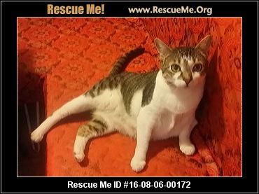 New Jersey Cat Rescue ― Adoptions ― Rescueme Org