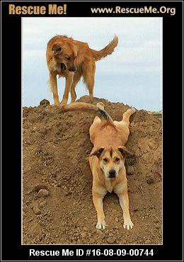 Sunshine Canyon Dog Rescue Boulder Co  Us