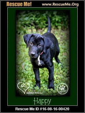 Greene County Indiana Dogs For Adoption