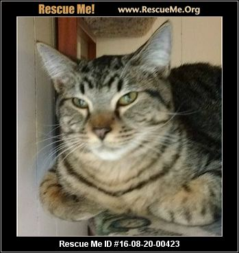 Bengal Cats For Adoption In Michigan