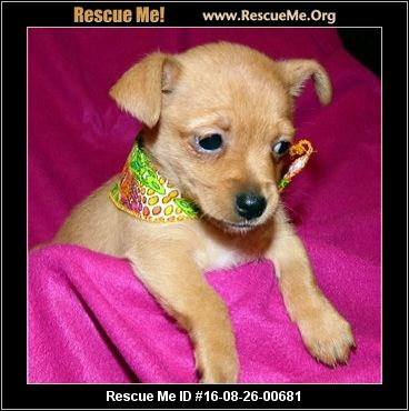 Pet Adoption,adopt a pet,pet adoption near me,adopt a pet com,free pet adoption near me,pet adoption center