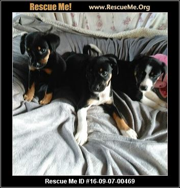Forever Paws Dog Puppy Rescue Indiana