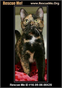 Pennsylvania Cat Rescue ― Adoptions ― Rescueme Org
