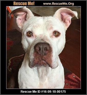 Best Friends Dog Rescue Cairo Ga