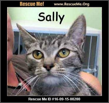 Cat Adoption Delaware County Pa