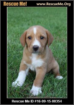 Florida Australian Shepherd Rescue ― Adoptions ― Rescueme Org