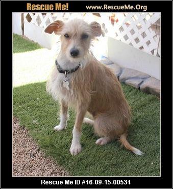 Stray Dog Rescue Phoenix Az