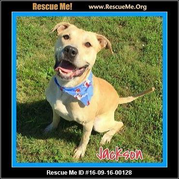 Indiana Golden Retriever Rescue ― Adoptions ― Rescueme Org