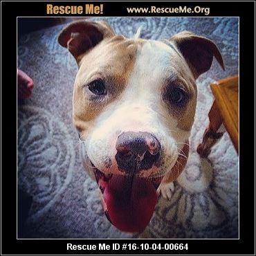California American Staffordshire Terrier Rescue