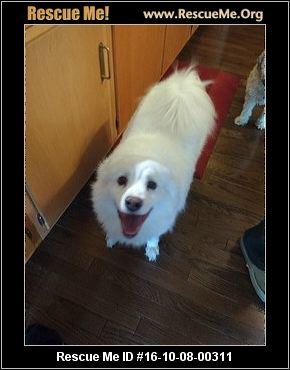 Adoptions Ohio American Eskimo Dog Rescue Autos Post
