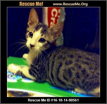 Declawed Cats For Adoption In Orange County Ca