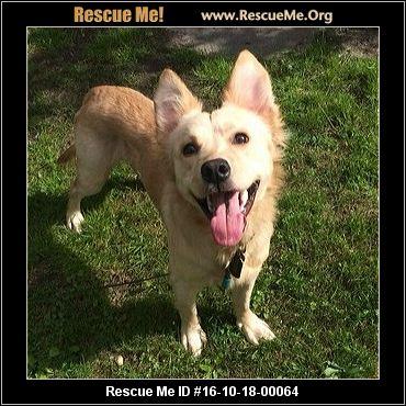 Golden retriever rescue jamesville ny