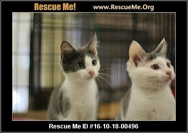 Countless Cats Rescue Inc