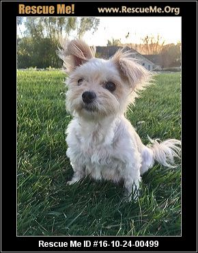 maltese rescue california california maltese rescue adoptions rescueme org 5082